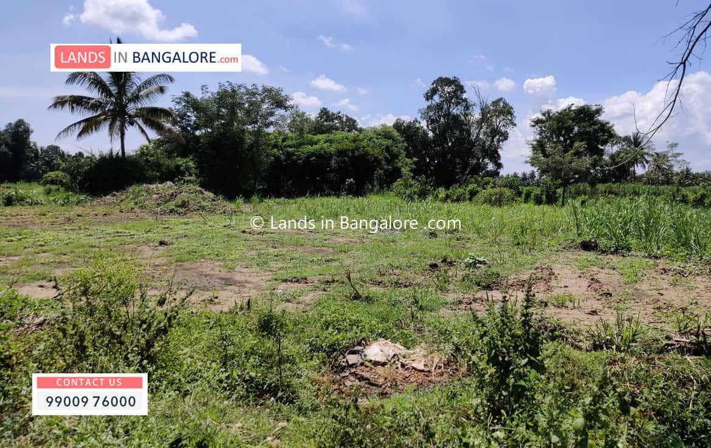 2 Acres Agricultural land for sale in Kaggalipura Kanakapura