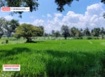 2 Acres land for sale in Kanakapura road Bangalore (2)