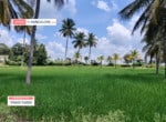 5 Acres Agricultural Land for sale in Kanakapura (1)