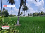 5 Acres Agricultural Land for sale in Kanakapura (3)