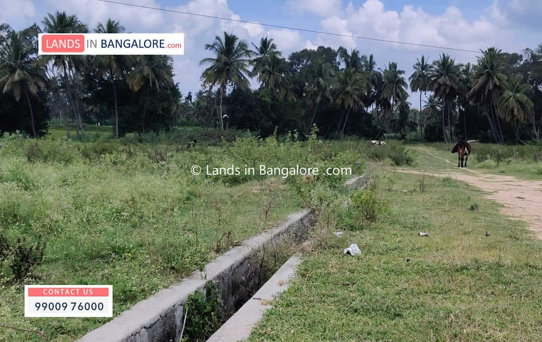 Agricultural land for sale in Somanahalli Kanakapura