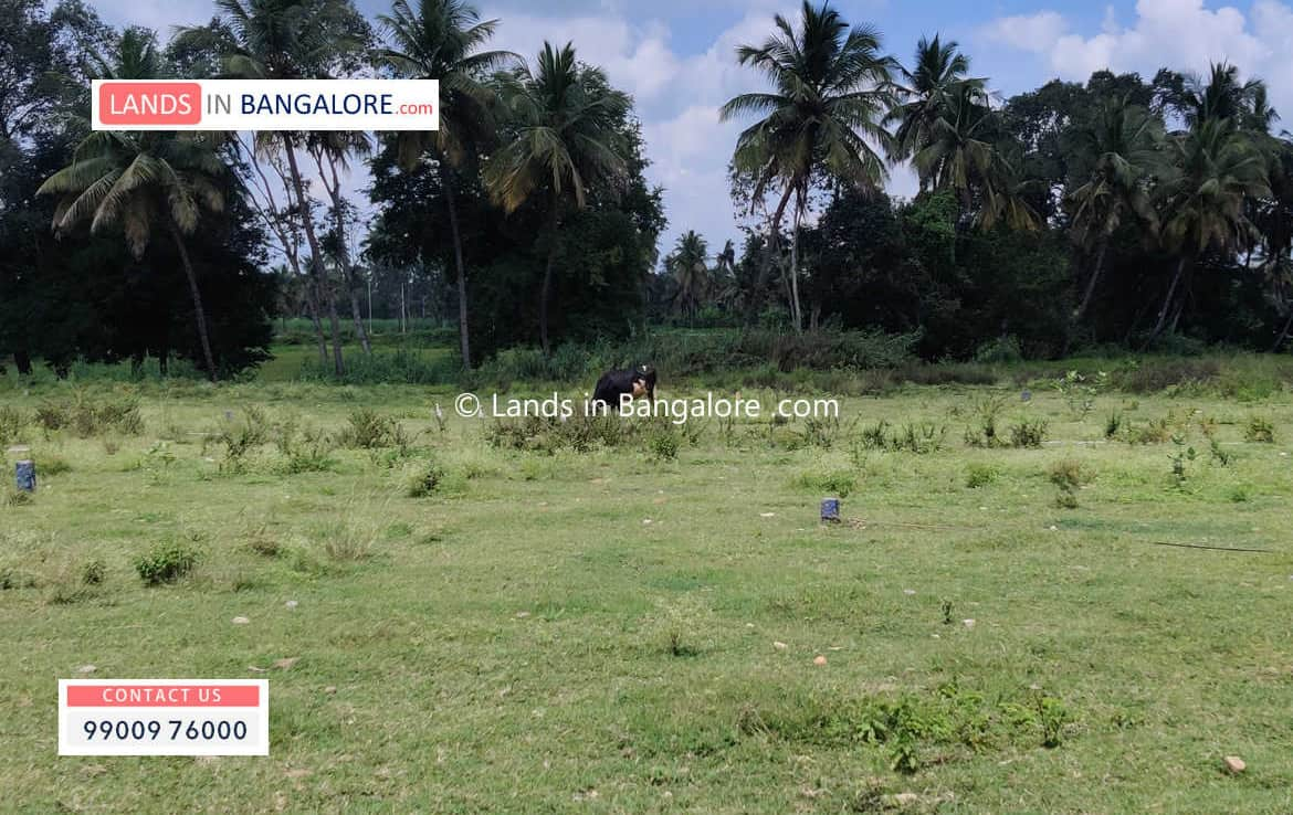 Agricultural land for sale in Somanahalli