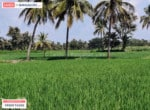 Agricultural land for sale in kanakapura road (1)