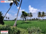 Agricultural land for sale in kanakapura road (2)