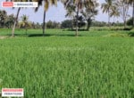 Agricultural land for sale in kanakapura road (4)