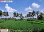 Agricultural land for sale in kanakapura road (6)