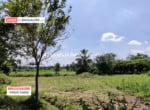 Cheap Agricultural land for sale in Kanakapura (1)