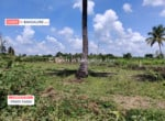 Cheap Agricultural land for sale in Kanakapura (3)
