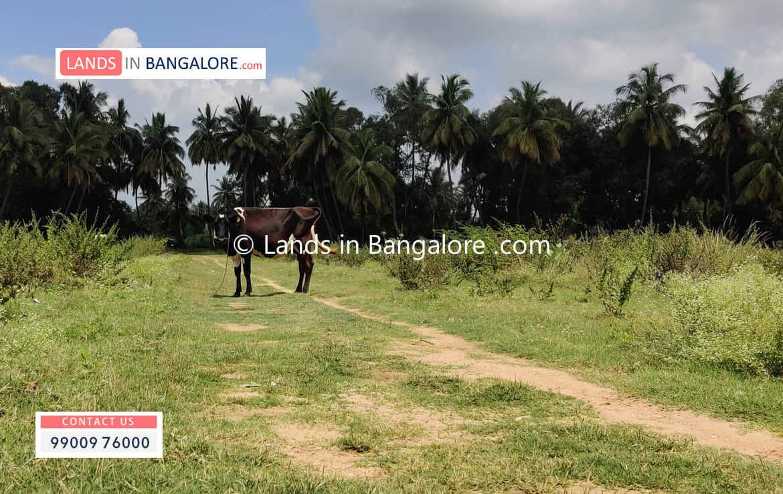 Farm Land for sale in Kanakapura road