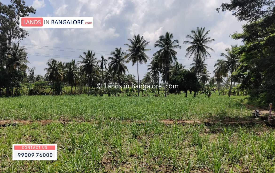 3 Acres Agricultural Land for sale in Harohalli Kanakapura