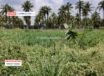 2 Acres Agricultural land for sale in Harohalli