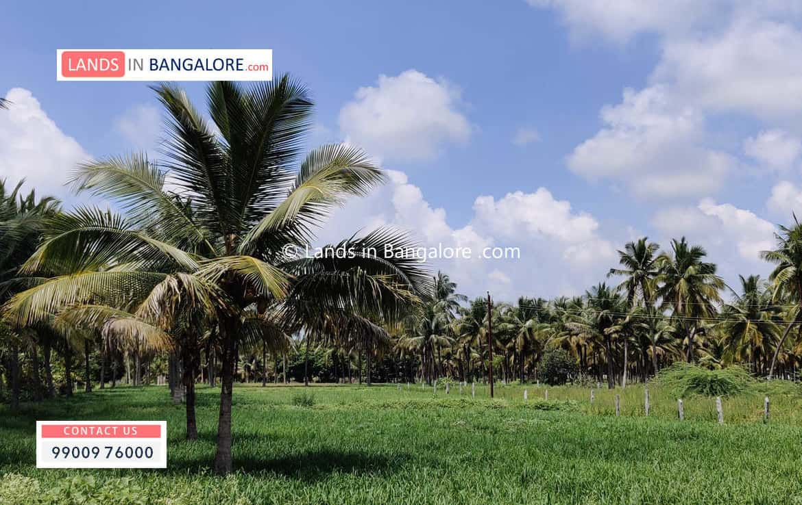 Agricultural land in Harohalli Bangalore