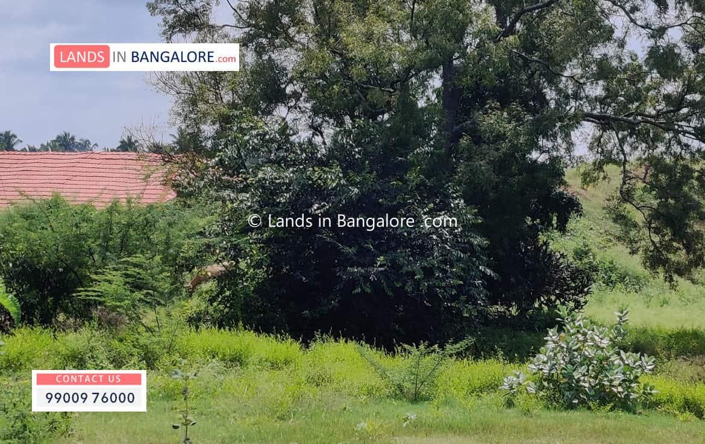 Land for sale in Harohalli Kanakapura road