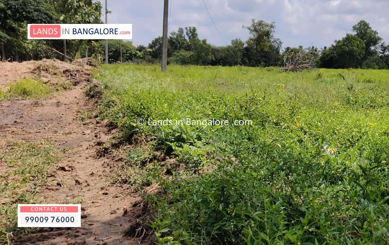 Agricultural land for sale in Harohalli Kanakapura